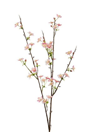 Apple Blossom - 85 Cm - Rosa