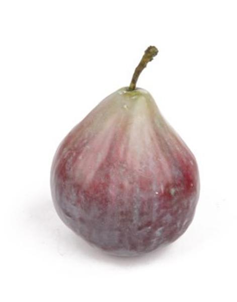 Feig 6,5 cm - violett mit gruen