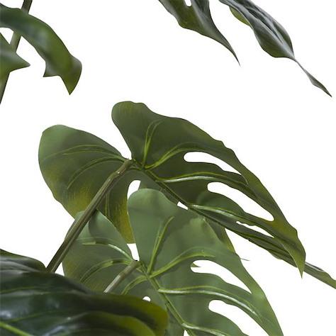 Monstera plant - 80 cm