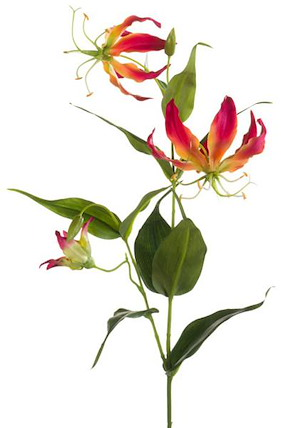 Gloriosa Spray - 75 Cm