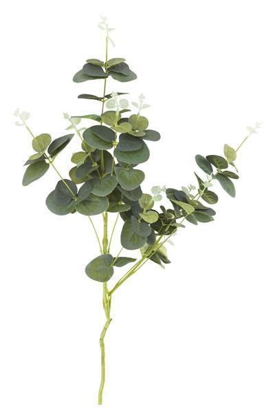 Eucalyptus spray - 75 cm