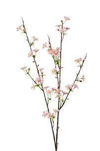 Apple Blossom - 85 Cm - Pink