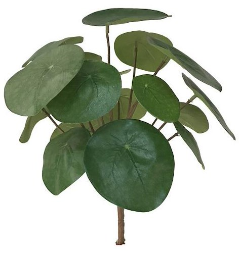 Pilea Bush - height 25 cm-1