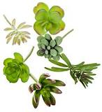 Succulent assorti - 6 stuks