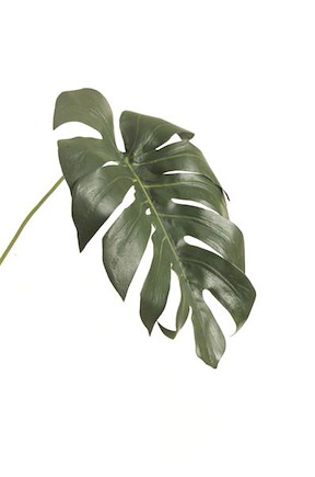 Monstera Leaf - 70 Cm - Gruen