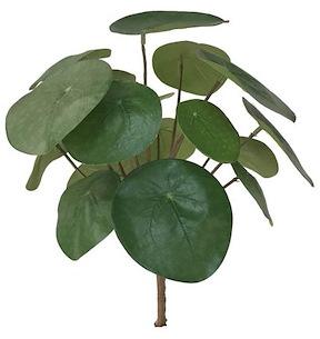 Pilea Bush - Hauteur 25 Cm
