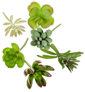 Succulent Assorti - 6 Pieces