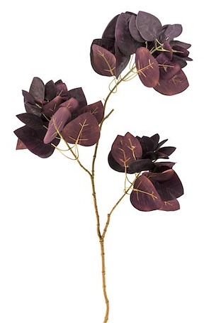 Cotinus Spray - 85 Cm